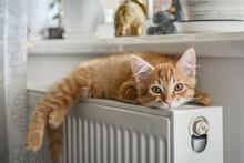 Ginger Kitten With Amber Eyes
