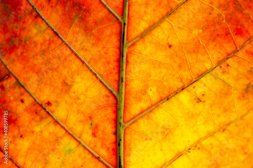 Red Leaf in Autumn. Abstract Art. Macro photography. Wallpaper Mural