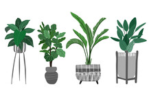Potted Plants Collection With Ficus And Banana