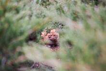 Cat In The Woods