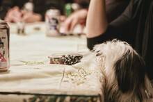 Close-up Of Dog And Coins On Table