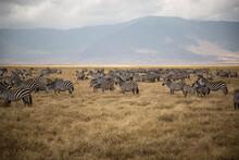 Flock Of Zebras On Landscape Against Sky