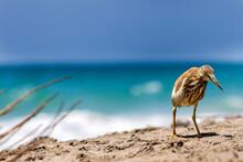 A Bird Standing At The Sea Coast, Close Up