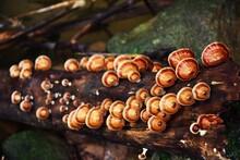 Close-up Of Mushrooms On Wood