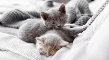 Gray And Tabby Adorable Cats Are Resting At Cozy Home Interior. Couple Fluffy Kittens Lie Sleep On Gray Sofa. Pets Cosiness Sleeping Kittens Muzzles. Long Web Banner