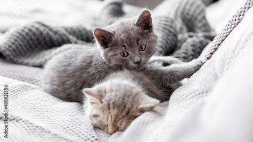 Obraz Gray and tabby adorable cats are resting at cozy home interior. Couple fluffy kittens lie sleep on gray sofa. Pets Cosiness Sleeping kittens muzzles. Long web banner - fototapety do salonu