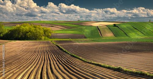 Fototapeta rice field obraz