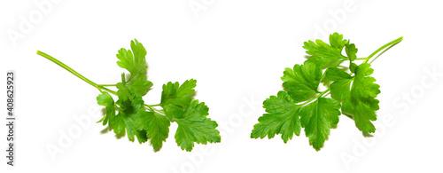 Fototapeta fresh herbs parsley isolated on white obraz