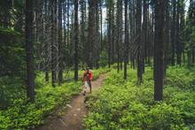Backpacking Man Walking Through Green Evergreen Forest