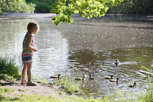 The Child Feeds The Ducks In The Park In Sunny Weather.