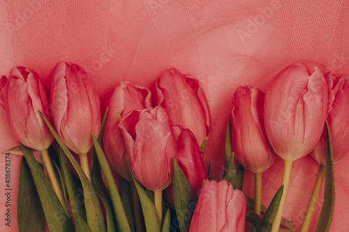 Fototapeta Red tulips on pink tulle. Tulips on pink background. Spring mood. Spring card  obraz na płótnie
