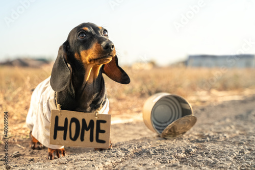 Obraz Unhappy small black dog in dirty clothes with plate Home stands near empty broken can on rural road on blurred background closeup - fototapety do salonu