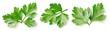 Parsley leaf isolated on white