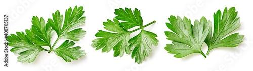 Parsley leaf isolated on white - fototapety na wymiar