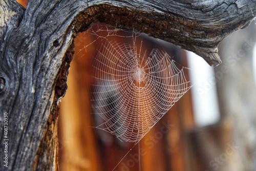 Obraz na plátně Spiderweb