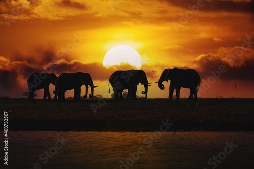 Fotografie, Obraz Evening silhouette over sunset of African Elephant, Botswana