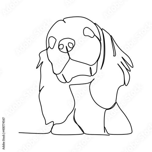 Fotografia, Obraz Cavalier King Charles Spaniel dog illustration