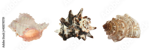 Canvas Print Set of different beautiful sea shells on white background