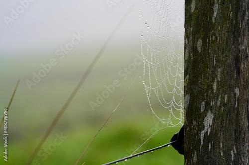 Vászonkép Spider web with dew.