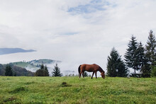 One Horse Grazing In A Meadow In A Mountains.