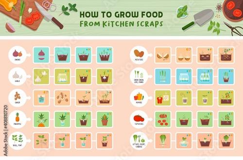Fotografiet How to grow food from kitchen scraps