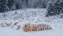 Firewood Piled In The Open Air, Covered With Snow In A Meadow, Near A Pine Forest.