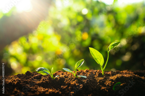 Obraz Three saplings are growing on the soil and a natural green background - fototapety do salonu