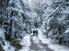 Two Hikers On A Road In A Snowy Forest