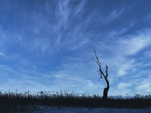 Silhouette Of A Tree At Dusk: A Silhouette Of A Dead Tree On The Prairie With Just A Few Branches Left Against The Bright Blue Sky With A Few Streaks Of Clouds