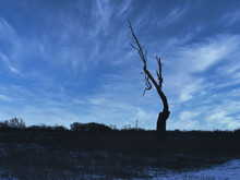 Close-up Of Silhouette Of A Tree At Dusk: A Silhouette Of A Dead Tree On The Prairie With Just A Few Branches Left Against The Bright Blue Sky With A Few Streaks Of Clouds