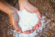 Grain Of Rice In The Hands Farmer, Rice White Grain In Handful, Organic Rice Of Asia