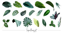 Tropical Leaves Vector Big Collection