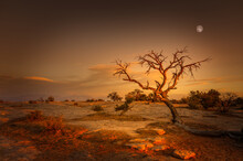Single Tree At Sunset With The Full Moon Behind In The Dead Horse Point State Park, Utah