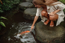 Feeding The Hungry Ornamental Koi Carps In The Pond. Women's Hand Hold Fish Food. Animal Care Concept.