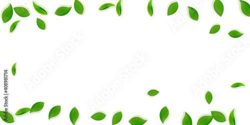 Slika na platnu Falling green leaves. Fresh tea neat leaves flying