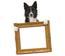 Border Collie Dog Holding An Empty Golden Frame