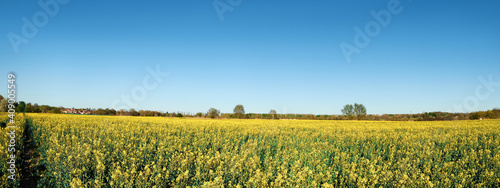 Springtime raps field with planted crop. Agricultural farmland, rural countryside in Brandenburg by Berlin, Germany, © tilialucida