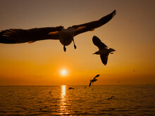 Sunset Sea Bird Silhouette Sunset.Silhouette Bird Flying Photography Sea. Minimal Photography