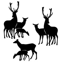 Wild Deer Family And Baby Fawn Black And White Vector Silhouette Set