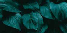 Leaves Texture Background, Blue Dark Tone