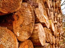 Holzstapel Am Waldesrand- Frisch Geschnittenes Holz Am Waldrand Gestapelt