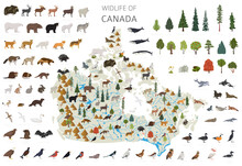 Flat Design Of Canada Wildlife. Animals, Birds And Plants Constructor Elements Isolated On White Set. Build Your Own Geography Infographics Collection.