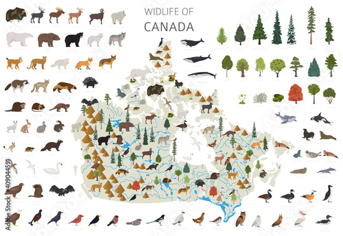 Tablou Canvas Flat design of Canada wildlife