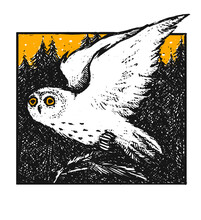 Hand Drawn Vector Illustration With Flying Owl And Trees.