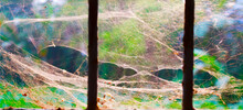 A Close Up Macro Photo Of A Complex Web Of Spiders Tree House Outside Window\in A Forest