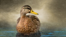 Faux Painting Treatment Of Duck In Water