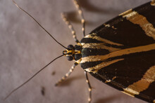 Jersey Tiger Moth, Extreme Macro, Beauty In Nature