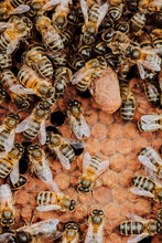 A Lot Of Bees In A Honeycomb