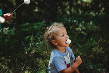 Cute Little Boy Eating Marshmallows In Stick Getting Messy At Forest