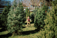 A Little Boy Walking In Between Christmas Trees At A Farm